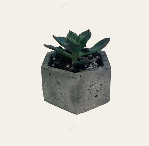 succulent-v5